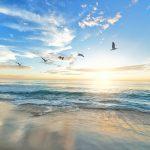 vogels die boven zee vliegen