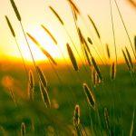 gras in het zomerse licht